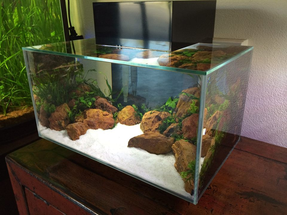 The Aquatic Plant Society A Planted Fluval Edge