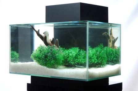 The Aquatic Plant Society A Planted Fluval Edge