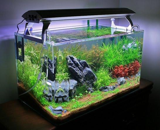 The Aquatic Plant Society Aquarium Dimensions With Lighting