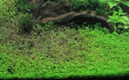 Decompostion : The Dark Side Of Aquatic Gardening