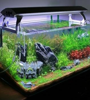 Aquarium Dimensions with Lighting